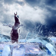 Penguin on the Ice in water drops. — Stock Photo #6355245