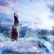 Penguin on the Ice in water drops. — Lizenzfreies Foto