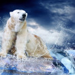 White Polar Bear Hunter on the Ice in water drops. — Stock Photo #6355271