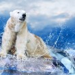 Foto Stock: White Polar Bear Hunter on Ice in water drops.