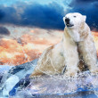 Stock Photo: White Polar Bear Hunter on the Ice in water drops.
