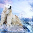 Foto Stock: White Polar Bear Hunter on Ice in water drops
