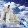 White Polar Bear Hunter on Ice in water drops — Stock Photo #6355283
