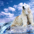 Stock Photo: White Polar Bear Hunter on the Ice in water drops