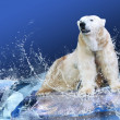 White Polar Bear Hunter on the Ice in water drops — Stock Photo #6355287
