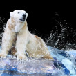 White Polar Bear Hunter on the Ice in water drops — Stock Photo