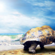 Big Turtle on the tropical oceans beach — Stock Photo #6355558