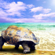Big Turtle on the tropical oceans beach — Foto Stock