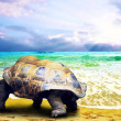 Big Turtle on the tropical oceans beach — Stock Photo #6355567