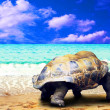 Big Turtle on the tropical oceans beach — Stok fotoğraf