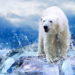 Stock Photo: White Polar Bear Hunter on Ice in water drops.