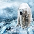 White Polar Bear Hunter on Ice in water drops — Foto Stock #6356590
