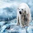 White Polar Bear Hunter on Ice in water drops — Stock Photo #6356590