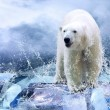 White Polar Bear Hunter on Ice in water drops — Foto Stock #6356591