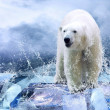 Stock Photo: White Polar Bear Hunter on Ice in water drops