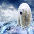 White Polar Bear Hunter on the Ice in water drops — Stock Photo #6356593