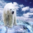 White Polar Bear Hunter on the Ice in water drops — Stock Photo #6356595