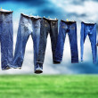 Jeans on a clothesline to dry - Stock Photo