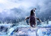 Pingüino en el hielo en gotas de agua. — Foto de Stock