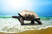 Big Turtle on the tropical oceans beach — Stock Photo