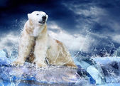 White Polar Bear Hunter on the Ice in water drops. — Foto de Stock