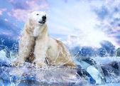 Caçador branco urso polar no gelo em gotas de água — Foto Stock