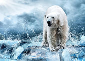 λευκή πολική αρκούδα κυνηγός στον πάγο σε σταγόνες νερό — Φωτογραφία Αρχείου