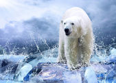 White Polar Bear Hunter on the Ice in water drops — Photo
