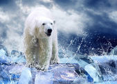 White Polar Bear Hunter on the Ice in water drops — Stok fotoğraf