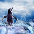 Foto Stock: Penguin on Ice in water drops.