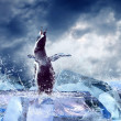 Penguin on the Ice in water drops. — Stock Photo #6370685