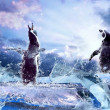 Penguin on Ice in water drops. — Stock Photo #6370687