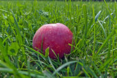 Red apple lying on green grass for a designer — Stock Photo