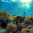 Coral reef — Stock Photo #6382271