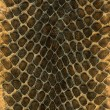 Snakeskin — Stock Photo