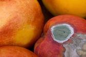 Mold on Peach — Stock Photo