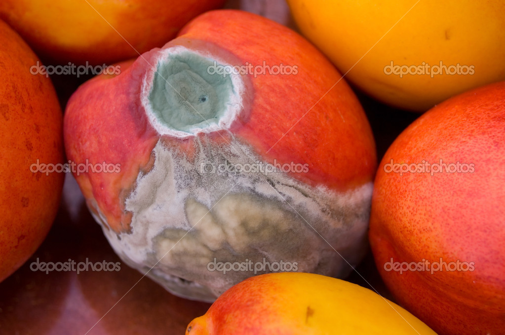 A mold attacked peach surrounded by good ones. — Stock Photo #6214036