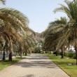 Stock Photo: Alley with palm trees in Muscat