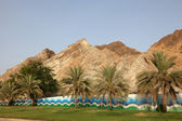 Palm Trees In Muscat, Oman — Stock Photo