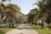 Alley with palm trees in Muscat — Stock Photo