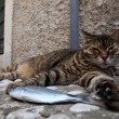 Lazy cat - Foto de Stock