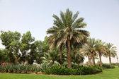 Palm Trees in Al Ain, Oasis City — Stock Photo