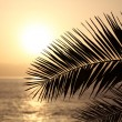Palm leaf silhouette at sunset. Canary Island Tenerife, Spain — Stock Photo