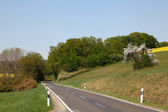 Country road with trees and meadows on the side — Stock Photo