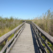 Stock Photo: Observation Trail in Everglades