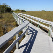 Observation Trail in the Everglades National Park, Florida USA — Stock Photo #6384479