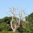 Dry tree in the Everglades National Park, Florida — Stock Photo