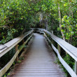 Observation Trail in the Everglades National Park, Florida USA — Stock Photo #6385376
