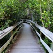 Observation Trail in the Everglades National Park, Florida USA — Stock Photo