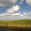 Landscape in the Everglades National Park, Florida USA — Stock Photo